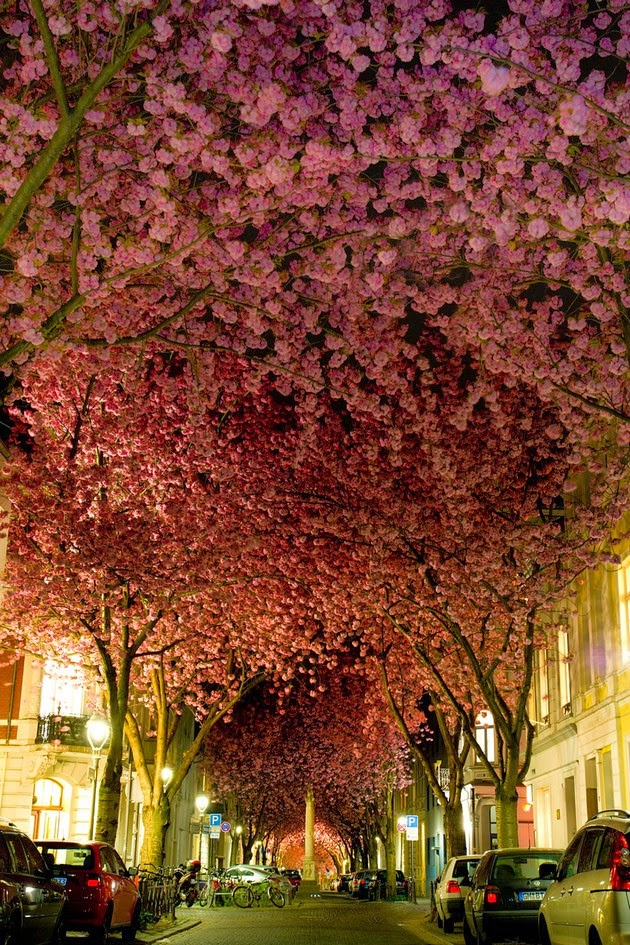 tree tunnels Street in Bonn, Germany