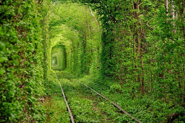 tree tunnels Tunnel of Love in Ukraine