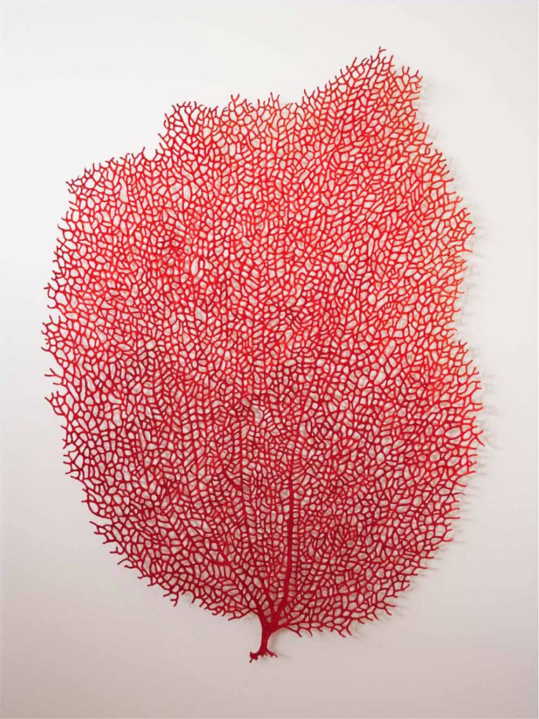 meredith woolnough3