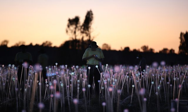 Bruce Munro - Field of light (2)