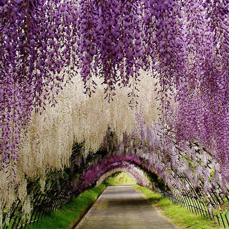 nature-tunnel-14