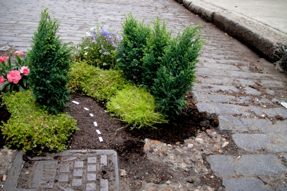 planting-flowers-in-potholes-11